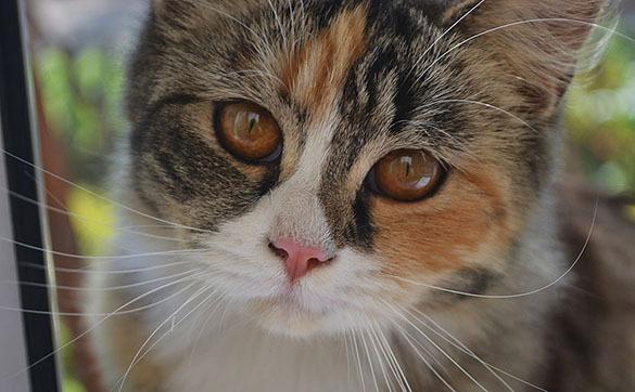 Huffington Post: Ученые доказали - кошатникам грозит шизофрения. Кошка