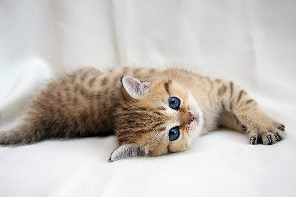 Спокойствие заканчивается, когда котенок начинает скучать!. 393637.jpeg