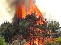 К российской границе приближается лесной пожар из Китая
