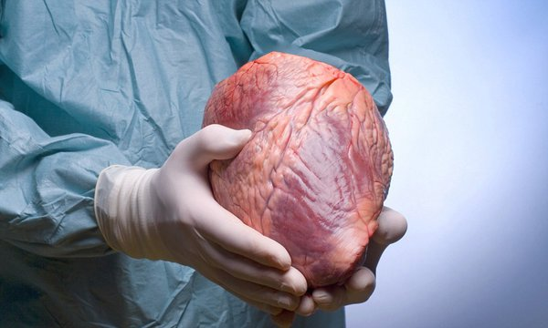 Собственная почка как стартовый капитал. черные трансплантологи