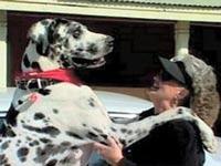 Скончалась самая высокая в мире собака