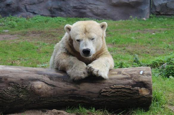 Втайге Иркутской области медведь похитил уохотника два ружья