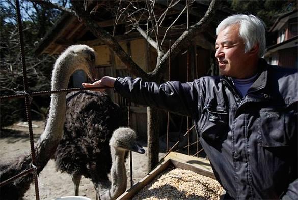 В зоне отчуждения Фукусимы по-прежнему живет