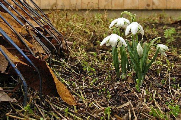 Апрельский сад - не паханное поле! Советы новичкам-садоводам. 393647.jpeg