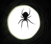 Ученые случайно открыли новый вид паука в музее