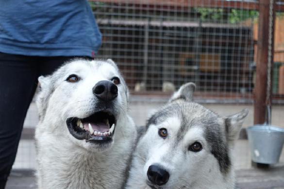 Лай-лай: швейцарским собакам разрешили лаять во весь голос. Лай-лай: швейцарским собакам разрешили лаять во весь голос
