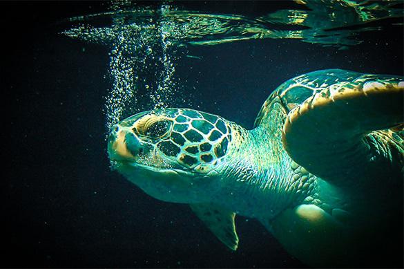Из Москвы-реки поймали гигантскую черепаху
