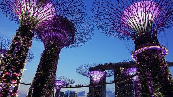 Новый год в Сингапуре: почему стоит посетить Чайнатаун. Новый год в Сингапуре: почему стоит посетить Чайнатаун.