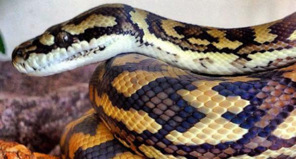 7 Удивительных домашних змей. Часть 1. 394653.jpeg
