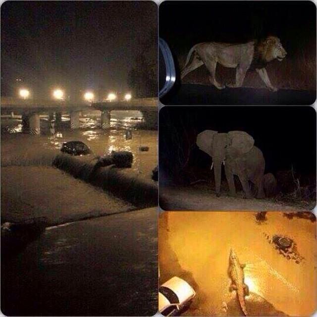 В Тбилиси наводнением разрушены дома, по улицам рыщут львы и тигры. 321659.jpeg