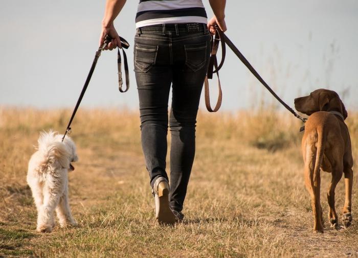 Как приучить животное к тому, что вы уходите на работу