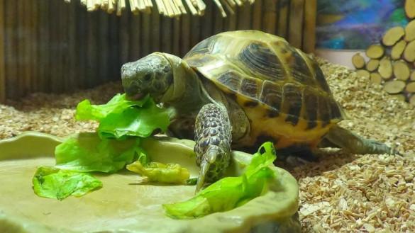 Что нужно знать о содержании черепах в домашних условиях. 394660.jpeg
