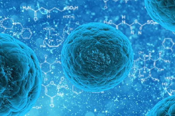 Ученые вырастили мышечную ткань из стволовых клеток человека. 381663.jpeg
