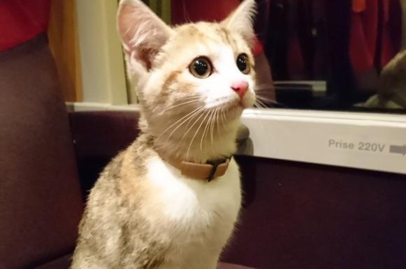 Потерявшийся котенок сам приехал домой на поезде. Потерявшийся котенок сам приехал домой на поезде