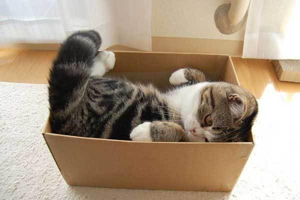 Почему кошки любят коробки?. 393664.jpeg