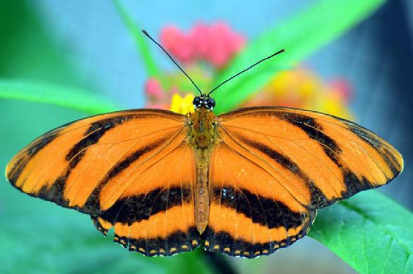 Найдены отпечатки доисторических бабочек. 381665.jpeg