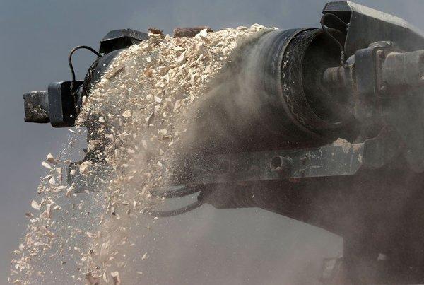 Браконьеры чуть не заработали миллионы долларов на контрабанде слоновой кости через Дубай. 318668.jpeg
