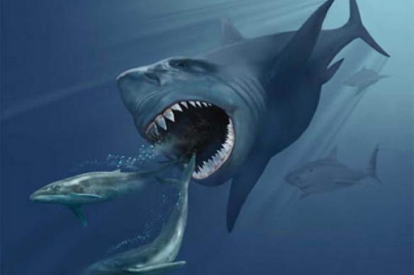 В Приморье акула и охотник не поделили добычу. 390668.jpeg