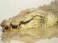 Одесские спасатели поймали крокодила в городском пруду
