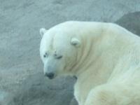 медведь. 270669.jpeg