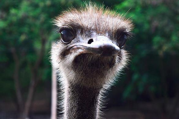 У Варчука нашли куртку из страуса за 40 тысяч долларов