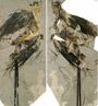 Ученые нашли самую древнюю беззубую птицу