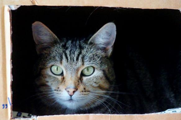 Почему кошки так любят коробки?- Исправленный. 397675.jpeg