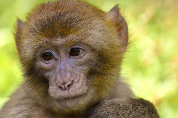 В Оренбурге обезьяна из зоопарка покусала школьницу. Обезьяна