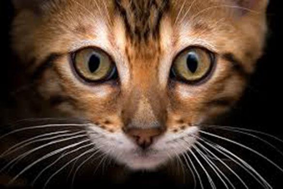 Дорожный патруль спас застрявшего кота Майка на ТТК. 371678.jpeg