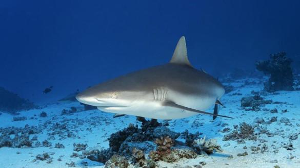 В Австралии на мужчину напала акула. 394679.jpeg