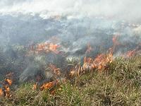 Весенние травяные палы сжигают Россию. 282681.jpeg
