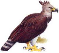 Птица-людоед – не просто легенда