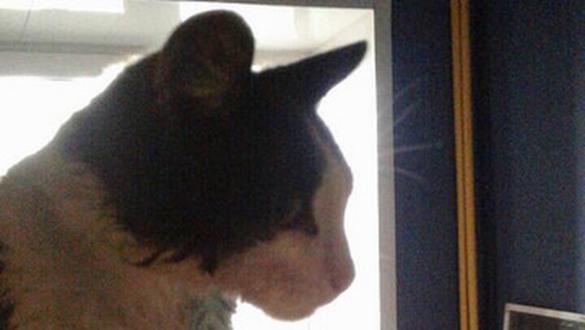 В Сызрани четыре часа спасали кошку