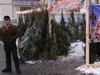 Новогодние елки будут продавать на специальных базарах
