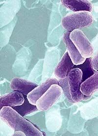 Бактериальная батарея создаст энергетику будущего