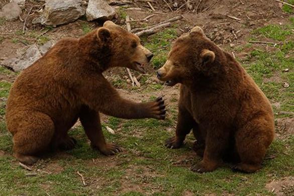 В Хорватии существует приют для медведей. В Хорватии междеди живут в приюте
