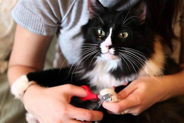 Нужно ли стричь когти кошкам?. 393688.jpeg