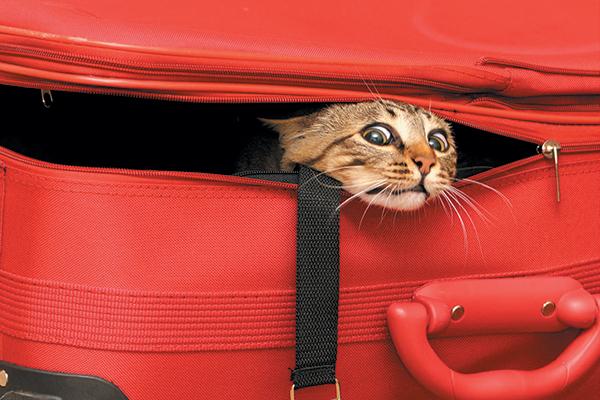 Переезд с кошкой: без паники!. 393689.jpeg
