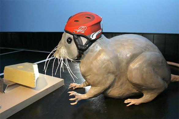 В британском музее мышеловка поймала свою жертву через 155 лет п