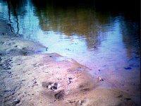 Тонны нефти утекли в Ангару: пострадали экология и экономика. 257693.jpeg
