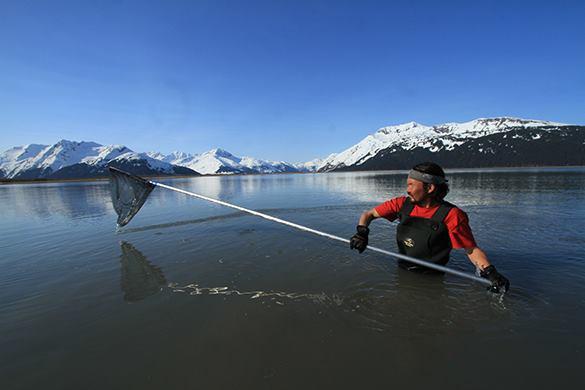 Туристы на Аляске обнаружили