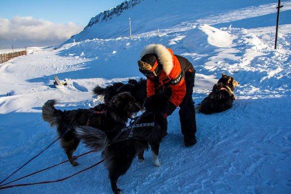 Жиль Элькем с собаками