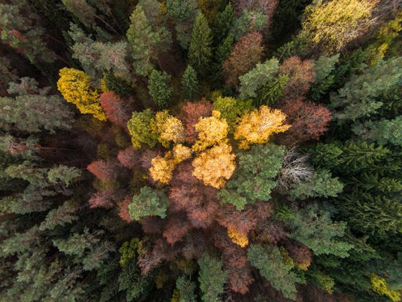 Чем болеет российский лес?