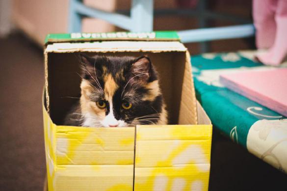 Почему кот упорно лезет даже в маленькую коробку и любит валяться на спине. Почему кот упорно лезет даже в маленькую в коробку и любит валят