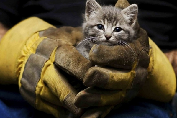 Будем жить. 5 трогательных и удивительных историй о спасении котят. 393696.jpeg