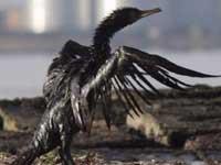 В Керченском проливе ликвидированы последствия экокатастрофы