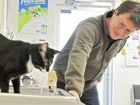 Британская пара преодолела тысячи километров ради бродячего кота