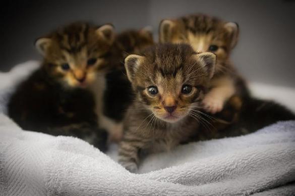 Три котенка заперлись в машине и путешествовали против воли. 393702.jpeg