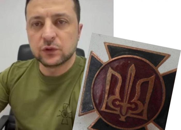 Кошка помогла нелегальному мигранту избежать депортации
