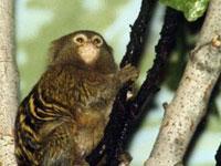 Ученые обнаружили обезьян с